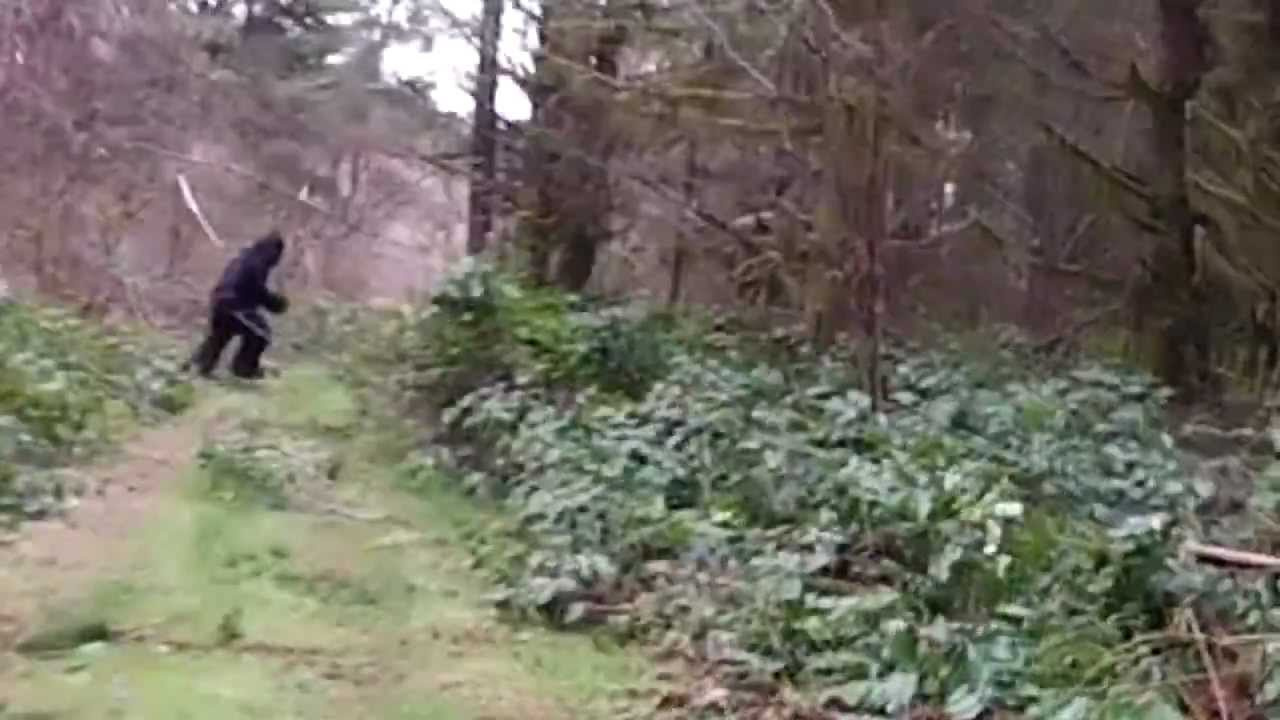 bigfoot running forest