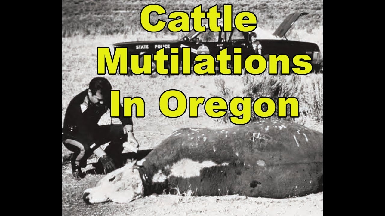 Cattle Mutilations Are Happening Again In Oregon – Aliens Or Secret Government Project?