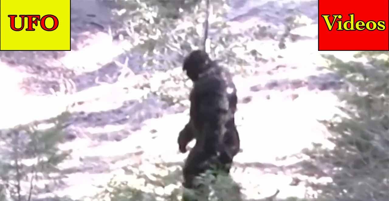 Hovering Lights Over Brooklyn – Bigfoot Video – Strange Object On Mars – Deathbed UFO Confession
